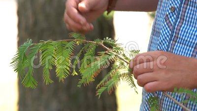 Τα χέρια των ανδρών κρατούν ένα φυτό απόθεμα βίντεο