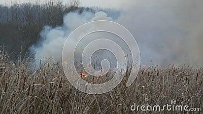 Τεράστιος καπνός από μια πυρκαγιά στη δασική στέπα Καίγοντας ξηροί χλόη και οι Μπους Ξεράνετε τον κάλαμο που εγκαύματα από μια φλ φιλμ μικρού μήκους