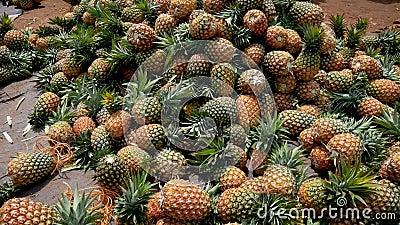 Τεράστιος σωρός ώριμων ανανά που πωλούνται στην αγορά απόθεμα βίντεο