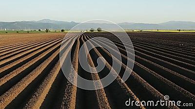 Τομέας πατατών την άνοιξη μετά από να σπείρει - furrows στο καλλιεργήσιμο έδαφος απόθεμα βίντεο