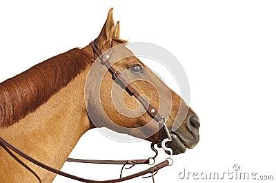 Το άλογο με άγριος eyed κοιτάζει