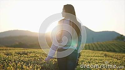Το εύθυμο κορίτσι κτυπά τα φύλλα των θάμνων τσαγιού στη φυτεία, γυρίζοντας στη κάμερα απόθεμα βίντεο