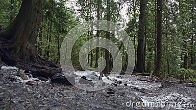 Το ορμώντας ρεύμα τροπικών δασών Pacific Northwest μετακινείται τον πυροβολισμό φιλμ μικρού μήκους
