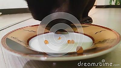 Το πορτοκάλι η γάτα τρώει το κόκκινο θηλαστικό χαβιαριών φιλμ μικρού μήκους