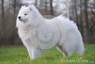 το σκυλί