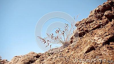 Το φυτό αυξάνεται μέσω των βράχων απόθεμα βίντεο