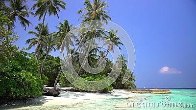 Τροπικό τοπίο με τους φοίνικες και την παραλία απόθεμα βίντεο