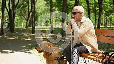 Τυφλός συνταξιούχος με βοηθητικό σκύλο που κάθεται μόνος στο πάρκο, στην κατάθλιψη απόθεμα βίντεο