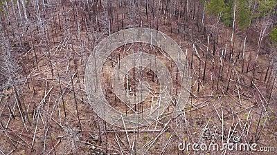 Υαλοπίνακες με ξηρά πεσμένα δέντρα στο δάσος Κεραία απόθεμα βίντεο