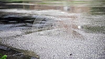 Υγρός ασφαλτοστρωμένος δρόμος και βροχοπτώσεις απόθεμα βίντεο
