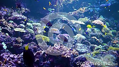 Υποβρύχιος κόσμος - θάλασσα, ωκεανός, ψάρια, κοράλλι απόθεμα βίντεο
