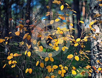 Υπόβαθρο φθινοπώρου