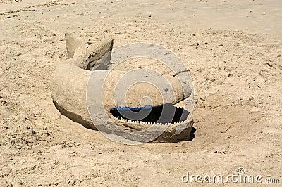 φάλαινα άμμου