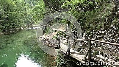 Φαράγγι Vintgar, ποταμός radovna, slovenie 150734 απόθεμα βίντεο