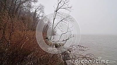 Φθινοπωρινό τοπίο Πρωινή ομίχλη δίπλα στο ποτάμι φιλμ μικρού μήκους