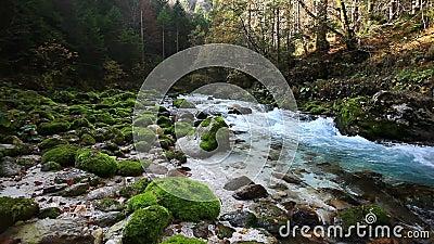 Φρέσκος κρύος ποταμός βουνών με τον ήχο της φύσης