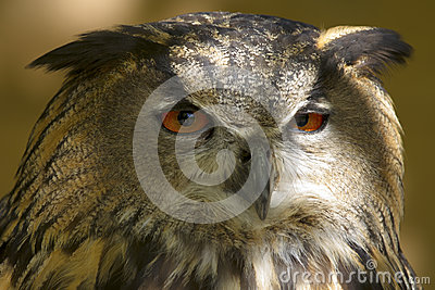 Φτερωτό αρπακτικό ζώο