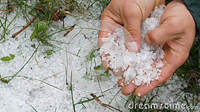 Φυσικές καταστροφές Παγωμένος πάγος πρώιμης άνοιξης στο πράσινο γρασίδι Ένας άντρας κρατά ένα κρύο χαλάζι στα χέρια απόθεμα βίντεο
