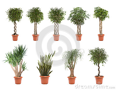 Φυτά γλαστρών