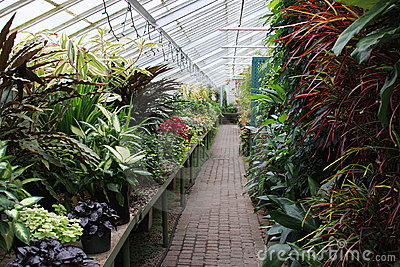 φυτά θερμοκηπίων