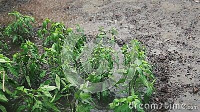 Φυτικός κήπος στη δυνατή βροχή φιλμ μικρού μήκους