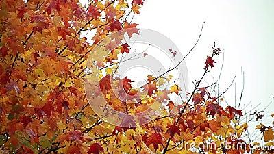 Φύλλα μειωμένο 1 φθινοπώρου απόθεμα βίντεο