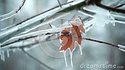 Φύλλο σε ένα χιόνι δέντρων φιλμ μικρού μήκους