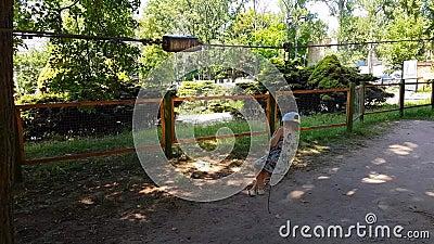 Χαμογελαστή έφηβη που ιππεύει σε δεσμά μεταξύ δέντρων στο πάρκο περιπέτειας Χαρούμενο κορίτσι έφηβη που καβαλάει μπόγκι στην αναρ απόθεμα βίντεο