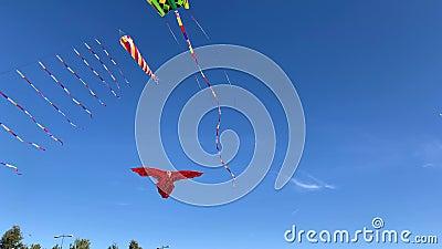 Χαρταετός με τη μορφή ενός κόκκινου αετού στον άνεμο φιλμ μικρού μήκους