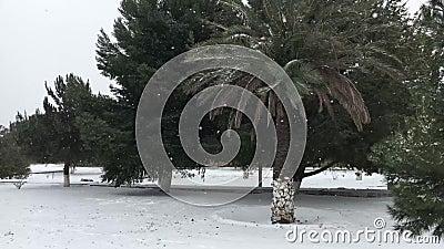 Χιονώδης ημέρα στο πάρκο απόθεμα βίντεο