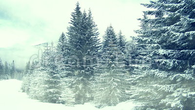 Χιόνι στα δέντρα Χειμώνας στα βουνά απόθεμα βίντεο