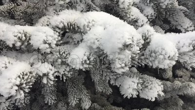 Χριστουγεννιάτικο δέντρο στο χιόνι απόθεμα βίντεο
