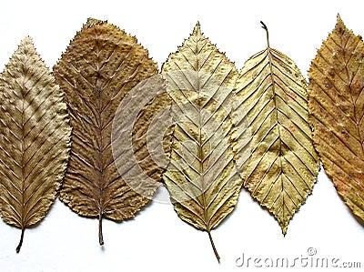 χρυσά φύλλα