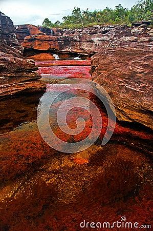 χρωματισμένος cano cristales ποταμός επτά