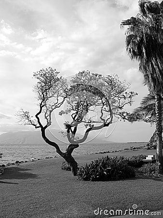 ωκεάνιο δέντρο