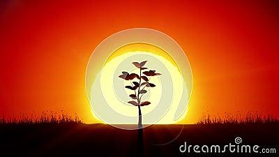 Όμορφο δέντρο ανατολής και ανάπτυξης Τρισδιάστατη ζωτικότητα έννοιας επιτεύγματος και προόδου Ο ήλιος αύξησης δίνει τη νέα ζωή HD ελεύθερη απεικόνιση δικαιώματος