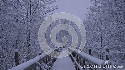Όμορφο βίντεο φύσης και τοπίων του χιονώδους μπλε βραδιού σούρουπου σε Katrineholm Σουηδία με την ξύλινη γέφυρα απόθεμα βίντεο