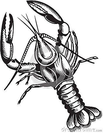 好看的龙虾手绘图