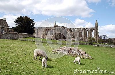 аббатство bolton