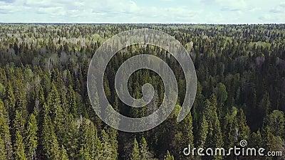 Авиационная съемка взгляд сверху леса видеоматериал