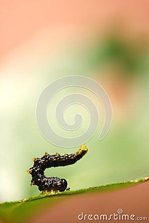 атлетическая гусеница