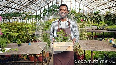 Афроамериканец-флорист, перевозящий контейнер с цветами в теплице сток-видео