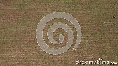 АЭРИАЛЬНЫЙ ПРОСМОТР Сельскохозяйственное поле после сбора урожая 4K видеоматериал