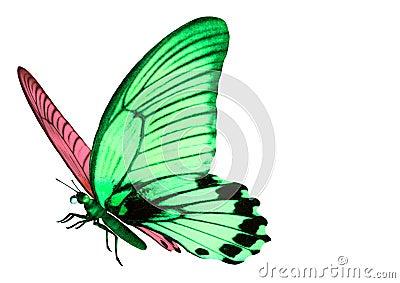 бабочка загадочная