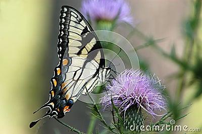 бабочка no6