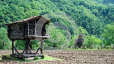 Батуми/Georgia 12 аграрная экосистема 15 2017 в Georgia видеоматериал