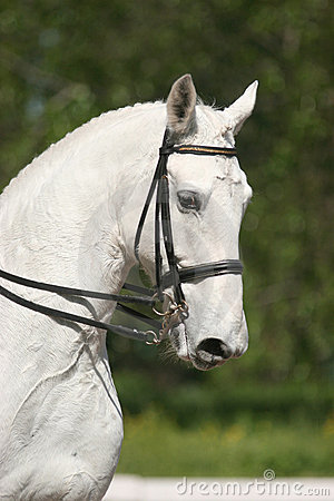 белизна портрета лошади