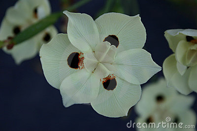 белизна цветка