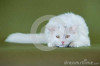 Белый котенок на вахте