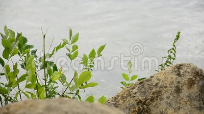 Берег озера видеоматериал